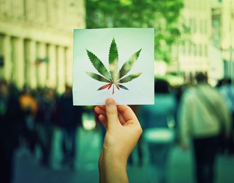 cannabis_pos